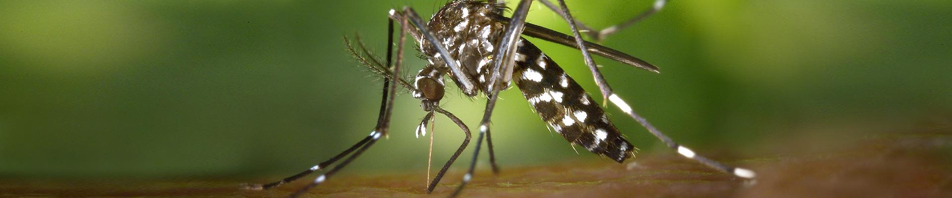 Kil Mor Pest Management Mosquito Control
